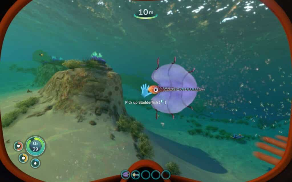 Bladderfish in Subnautica that can gives you water when eaten