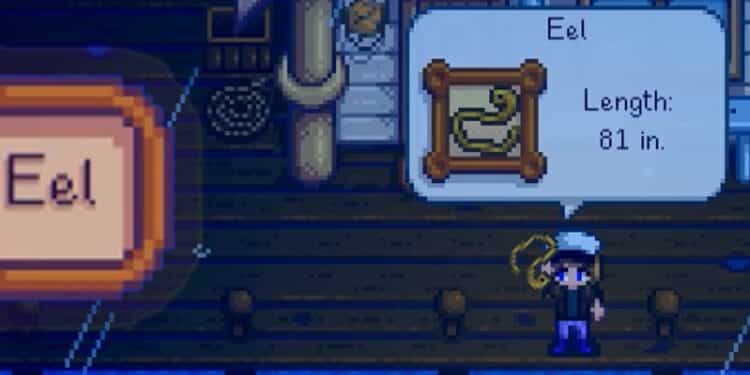 where to catch eel in stardew valley